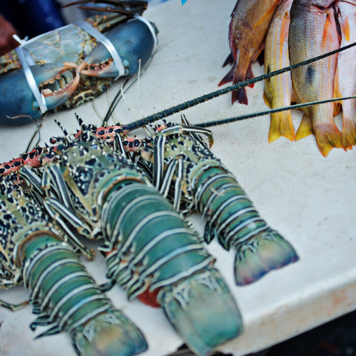 Sustainable fisheries offers opportunities for Blue Pacific